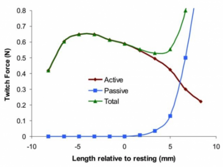Length-Tension Relationship Active and Passive